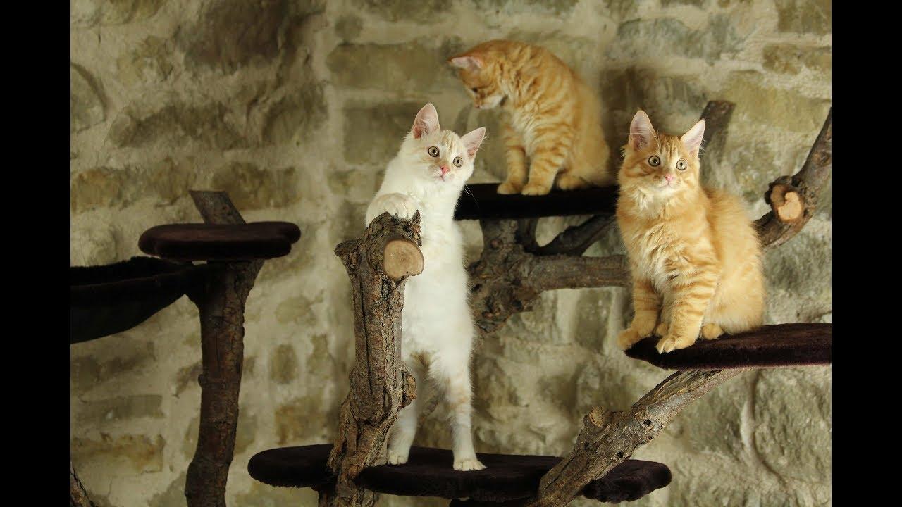 Tiragraffi gatto albero youtube for Tiragraffi gatti ikea