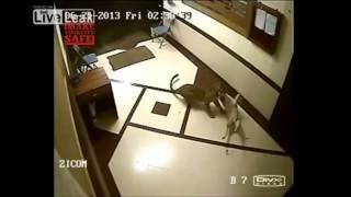 民家に野生のヒョウが侵入する瞬間映像!飼い主の犬が食べられる・・・【閲覧注意】衝撃映像 事故 thumbnail