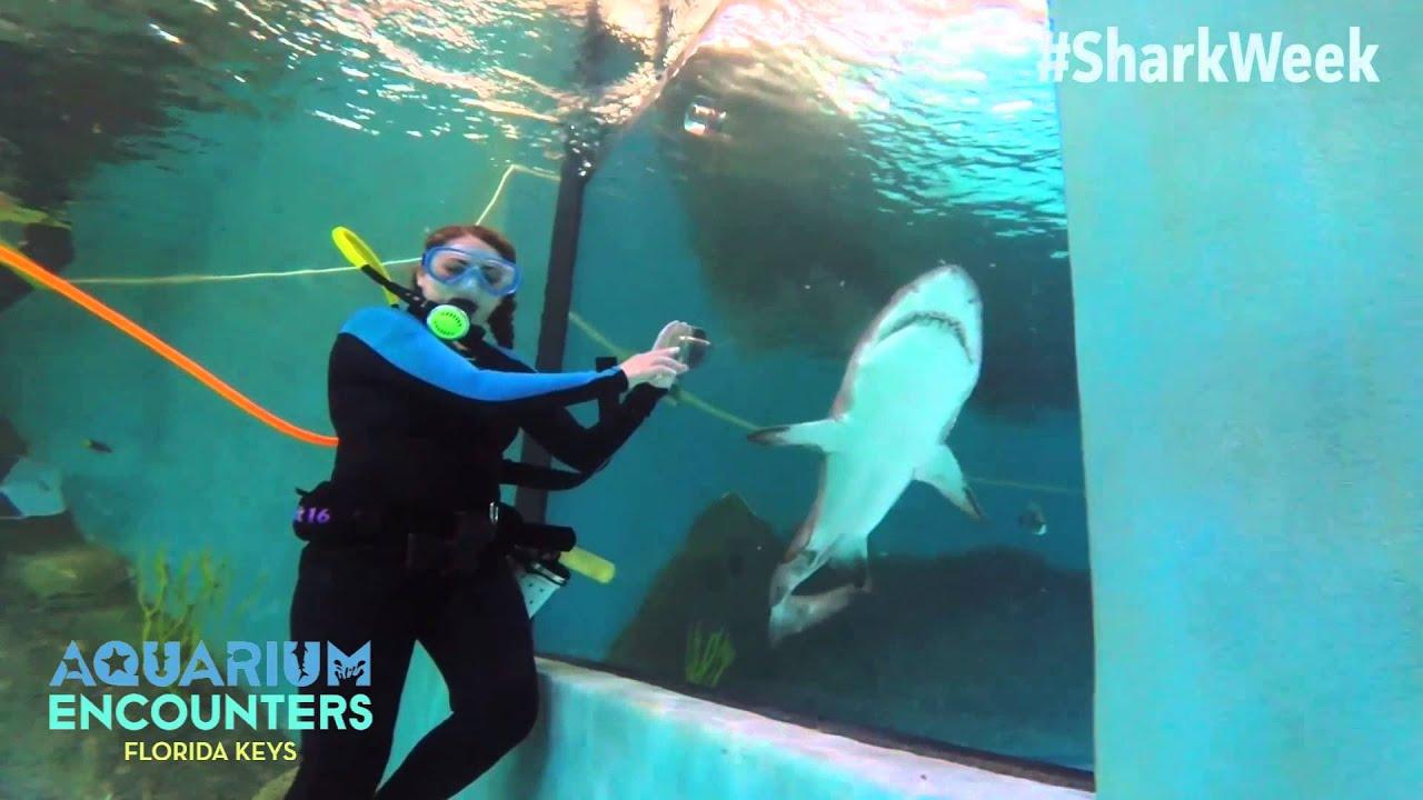 Shark Week 2015 Aquarium Encounters Youtube