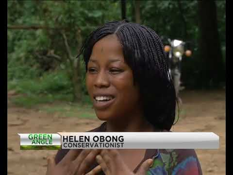 Green Angle visits Pandrillus Ranch, Boki Cross River State