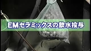 【EM畜産 利用編 09】EMセラミックスの使い方