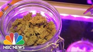 Where The Term '420' Comes From | 101 | NBC News
