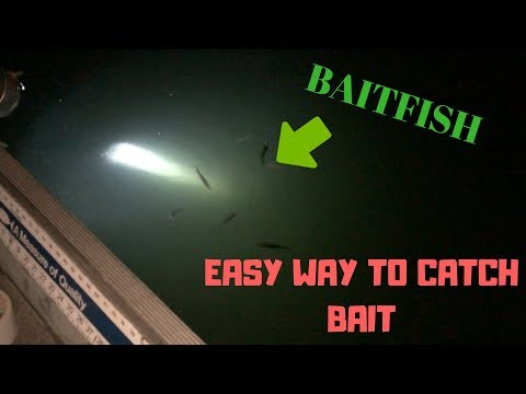 EASY Way To Catch BAITFISH At NIGHT