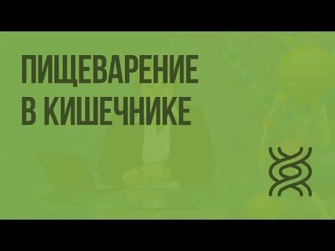 ГЛАВА 12 ПАТОФИЗИОЛОГИЯ ТИПОВЫХ НАРУШЕНИЙ ОБМЕНА ВЕЩЕСТВ