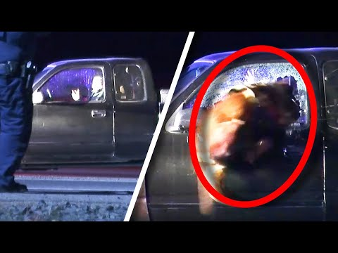 Kristina Kage - Duke the Superdog Jumps Through Car Window to Tackle Suspect