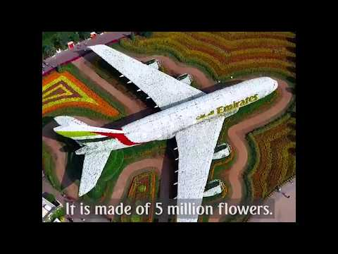 Emirates A380 in Dubai Miracle Garden | Emirates Airline