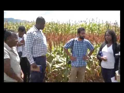 Soybean Documentary - Malawi