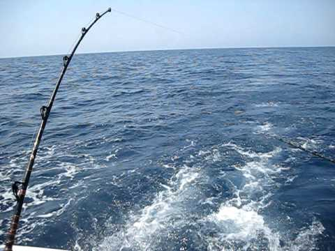 marlin hookup Strike and fight understanding blue marlin bite behavior and tips to improve your catch rate by steve campbell to increase your hook-up rate.