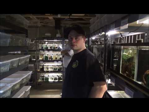 Fish Room Tour Of Jeremy Basch / Breeding Killifish / Species Identification