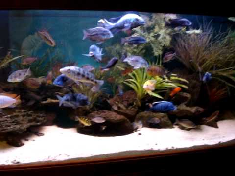 220 Gallon African Cichlid Tank!!!! (FEB '11 UPDATE)