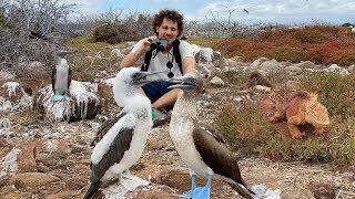 Analizando las especies más extrañas de Islas Galápagos 🦈🏝