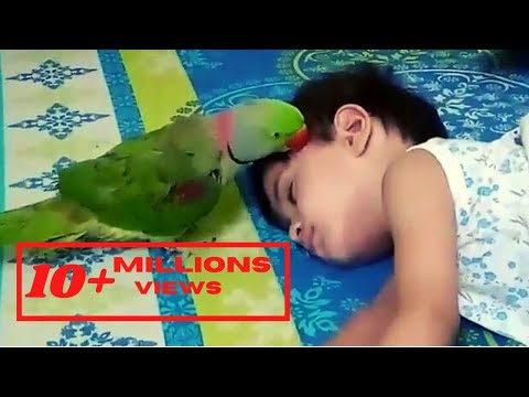 Funny Parrot - Get up let's play | Alexander parrot wants to play with his sleeping Bestie