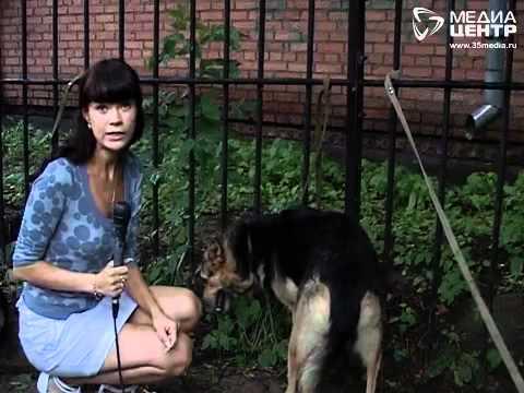 """Выставка приюта """"Пёс и кот"""" в Череповце"""