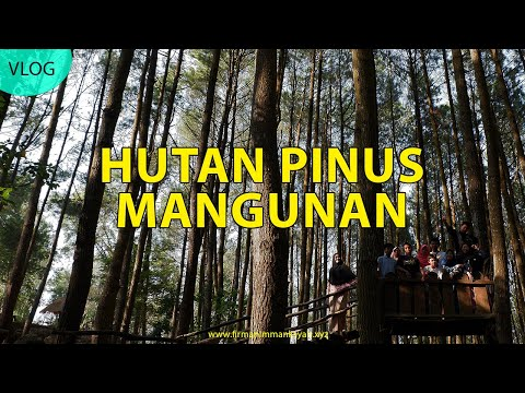 jangan-rusak-hutan-pinus-mangunan