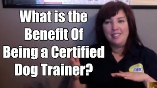 What Is The Benefit Of Being A Certified Dog Trainer?