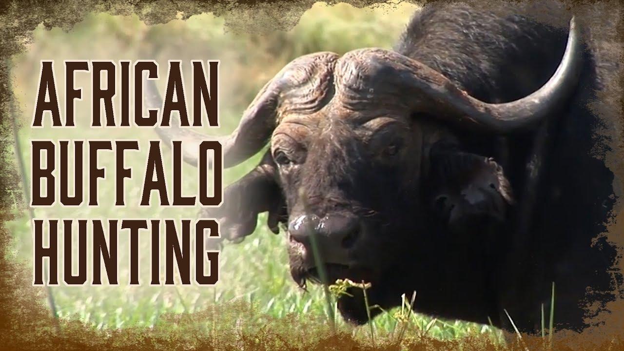 Buffalo   Craig Boddington