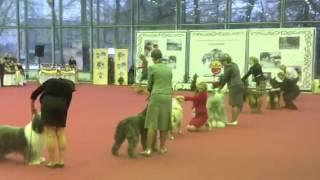"""""""Derzhava 2012"""", FCI group 1"""