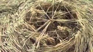 REAL UFOs Making Crop Circles Caught on Camera