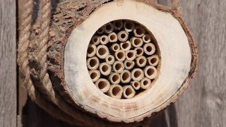 Solitary Bee Hives with Simon King