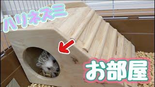 スロープつきの新しい隠れ家!ハリネズミ
