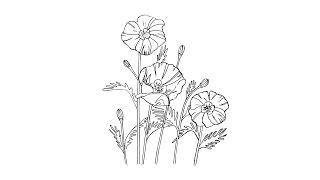 Как поэтапно нарисовать цветы маки: инструкция от EvriKak