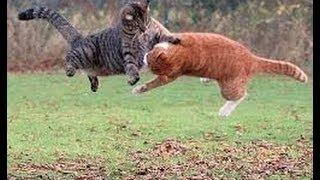 Vídeos engraçados, e polêmicos HD - videos brigas de gatos e cães
