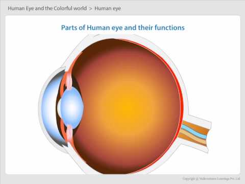 3 parts of human eye and their functions youtube 3 parts of human eye and their functions ccuart Choice Image