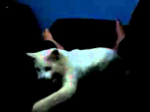 a gata devoradora