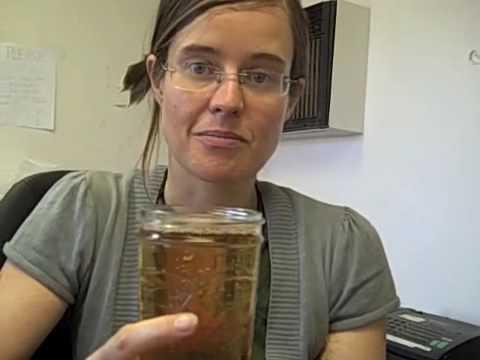 Marine Phytoplankton, Episode #178