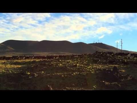 Wild Sheep at Sunrise on Saddle Road, Hawaii - New Year's Morning 2015