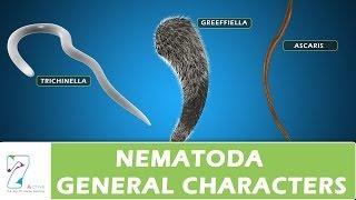 Nematoda General Characters