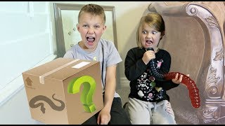 Surprise Mystery Box! What's In The Box?