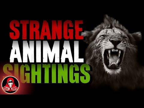 5 UNKNOWN Animal Sightings - Darkness Prevails