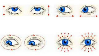 Как делать гимнастику для глаз взрослому в домашних условиях. Коротко о важном!
