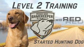 Intermediate Started Hunting Dog Training