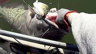Hooking SUMO Size Catfish At EXTREME Depths