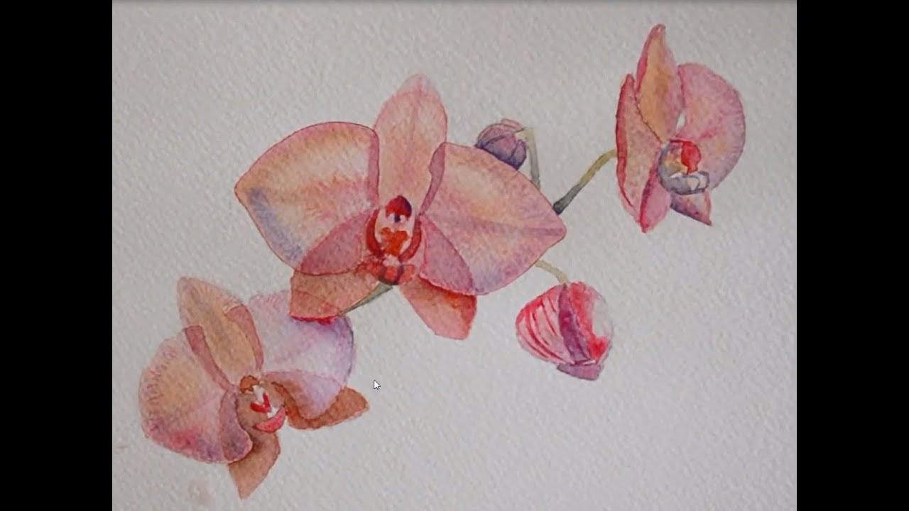 orchidee a l'aquarelle