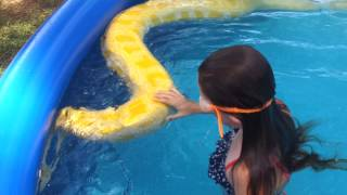 Girl swims with huge Burmese python