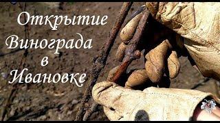 Открытие винограда в Ивановке