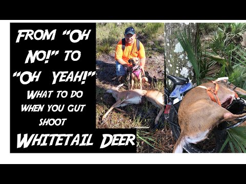 Oh No! I GUT SHOT A DEER! What To Do When Disaster Strikes (Swamp N Stomp Ep. #32)