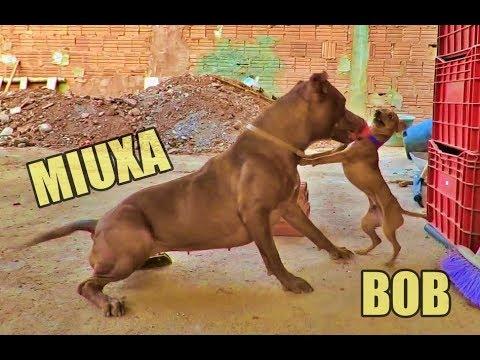PORQUE A MANOPLA DO INFINITO É MAIS FORTE QUE A MANOPLA STARK? from YouTube · Duration:  8 minutes 9 seconds