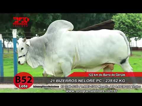 LOTE B52