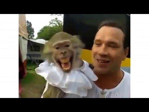 Смешное видео для вацап » Скачать Whatsapp