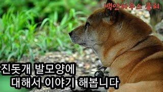 진돗개 발모양에 대해서@