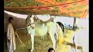 Shaki Gujjar of gujrat punjab pakistan
