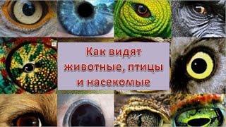 Как видят животные, птицы и насекомые.
