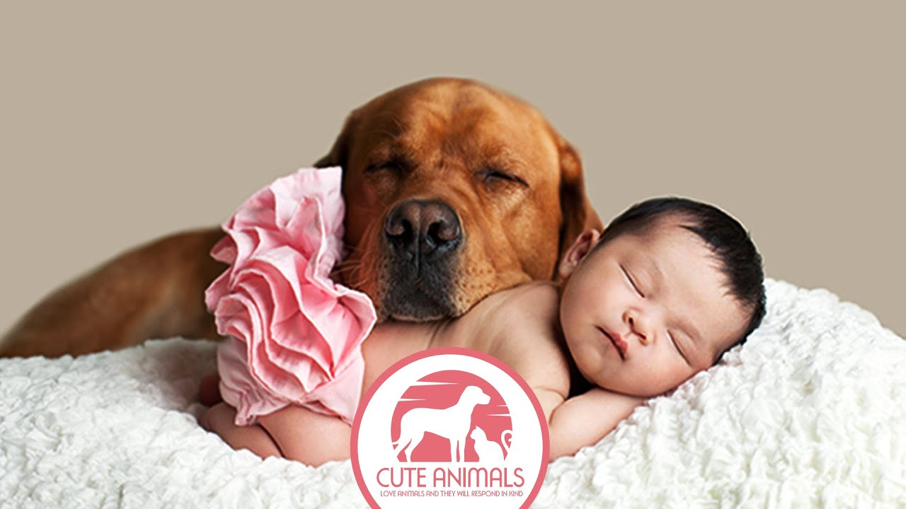 33 photos of cute dog with charming babes - youtube