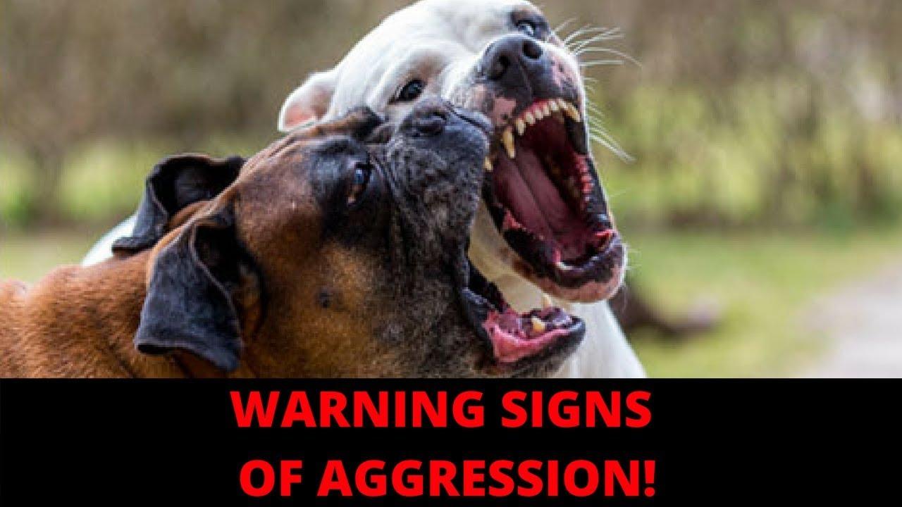 Make Dog Stop Biting