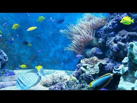 Why Fish At Tank Bottom Are Not Eating | Aquarium Care