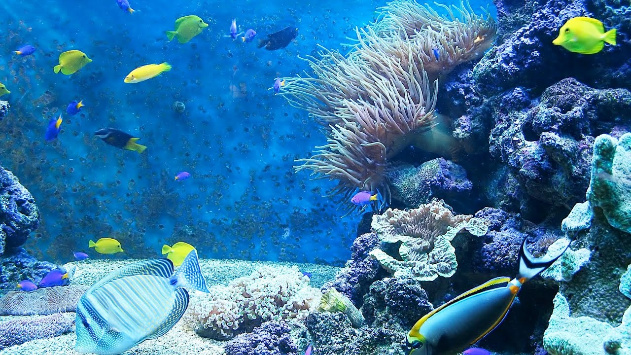 Freshwater aquarium fish not eating - Freshwater Aquarium Fish Not Eating